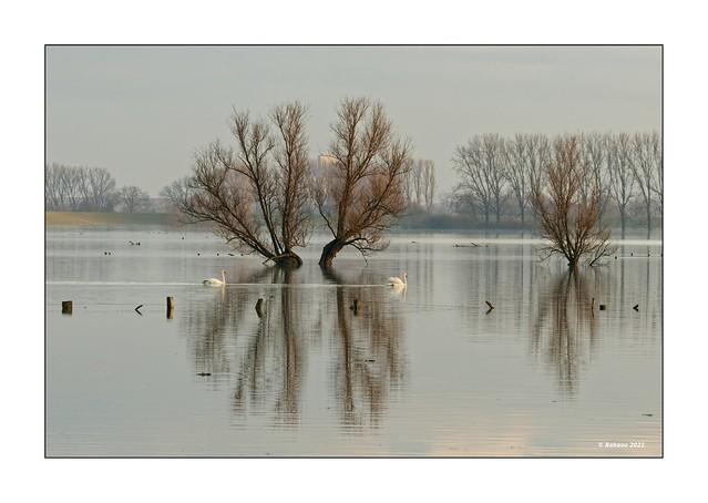 Bislicher Insel...Winterhochwasser III