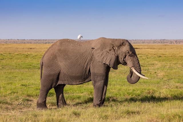 Armchair Traveling - Amboseli National Park