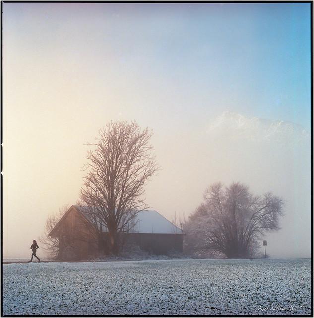 Morning run_Hasselblad 503cx