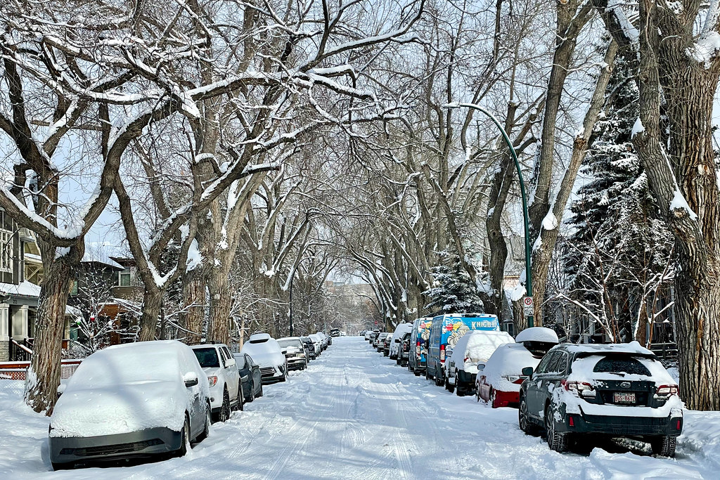 Snowy canopy