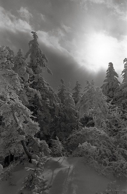 Cold Sun, film