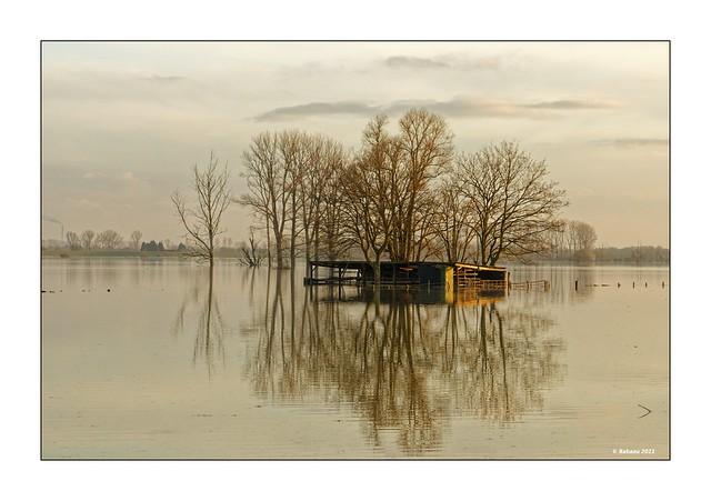 Bislicher Insel...Winterhochwasser IV
