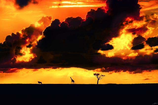 Day Ending in Wildlife