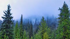 E.C. Manning Provincial Park - Canada
