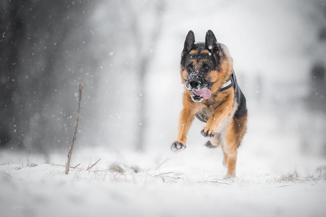 Run in the snow