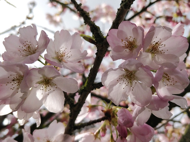 Branch of blossoms