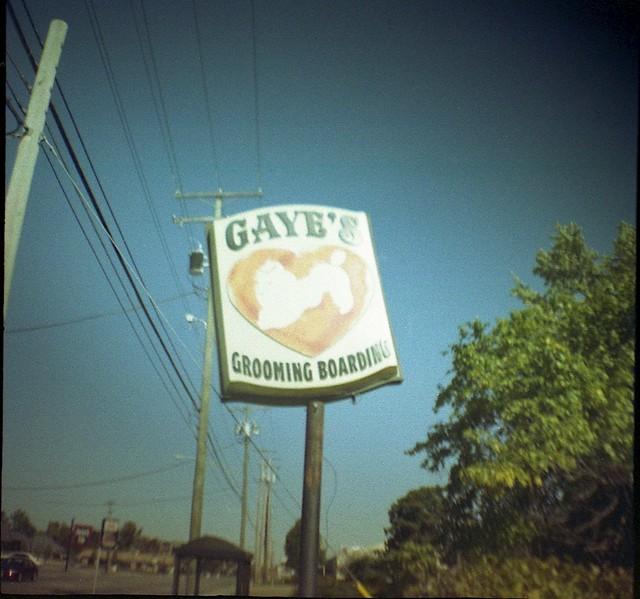 gaye's