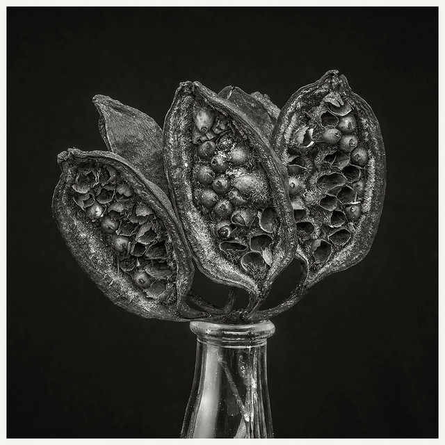 Flowers #5 2021; Tree Seed Pods