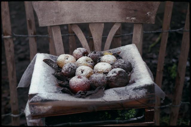 Neige sur des pommes pourries