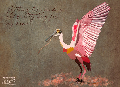 Image of a painted Roseate Spoonbill from the St. Augustine Alligator Farm.