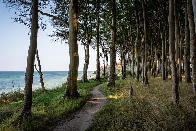 El Bosque de las ilusiones....