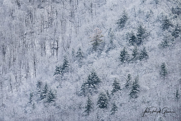 """""""The Essence of Cades Cove"""" Tennessee in the Great Smoky Mountains National Park   Judy Royal Glenn Photography"""