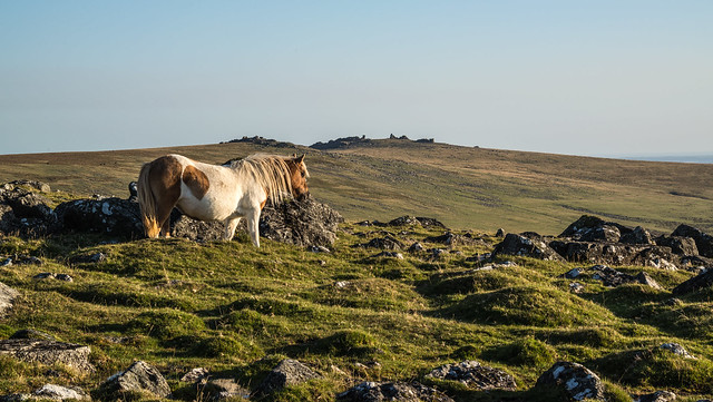 Pony on White Tor_NK2-1088