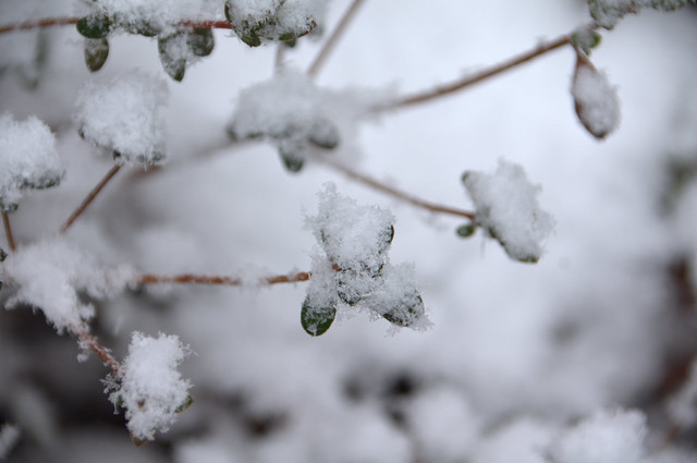 Snow Piles [Explored]