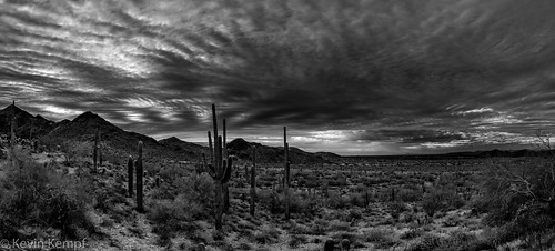 arizona hiking mcdowellsonoranpreserve scottsdale sunrise saguaro cactus clouds sky blackandwhite monochrome bw mountains
