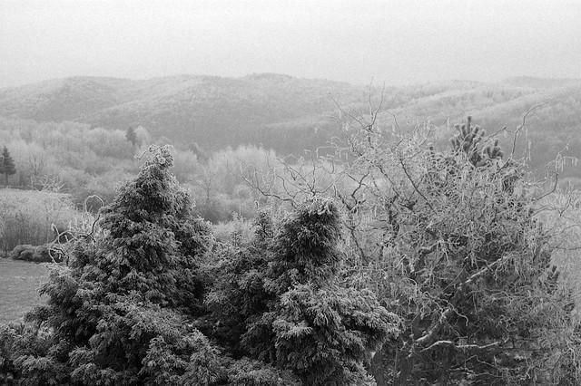 W gąszczu spraw / In the thicket of things