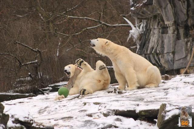 Besuch Tierpark Friedrichsfelde 06.02..21125