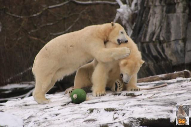 Besuch Tierpark Friedrichsfelde 06.02..21111