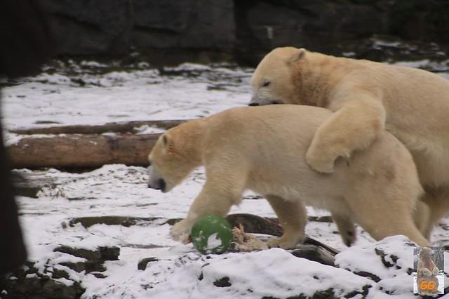 Besuch Tierpark Friedrichsfelde 06.02..21086