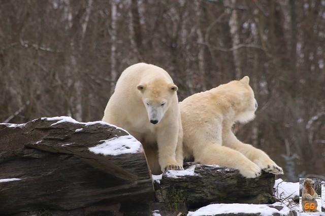 Besuch Tierpark Friedrichsfelde 06.02..21020