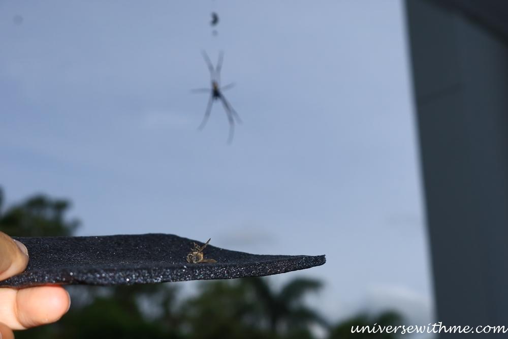Spider Animal_010