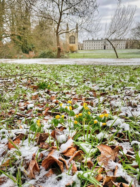 Cambridge 9 February