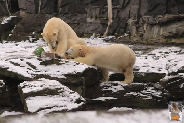 Besuch Tierpark Friedrichsfelde 06.02..21130