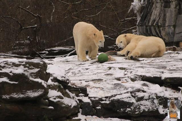 Besuch Tierpark Friedrichsfelde 06.02..21116