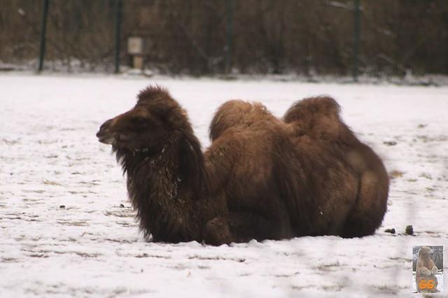 Besuch Tierpark Friedrichsfelde 06.02..21037