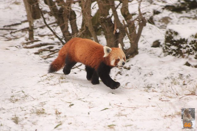 Besuch Tierpark Friedrichsfelde 06.02..21029