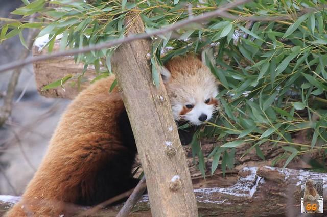 Besuch Tierpark Friedrichsfelde 06.02..21027