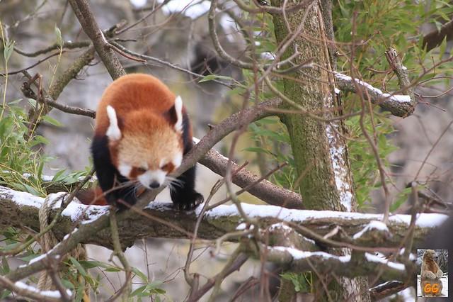 Besuch Tierpark Friedrichsfelde 06.02..21023