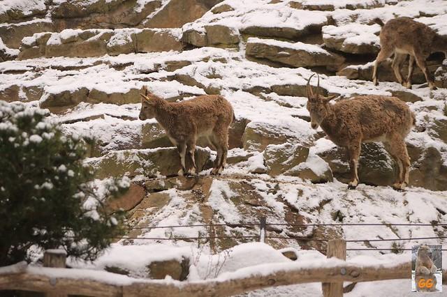Besuch Tierpark Friedrichsfelde 06.02..21007
