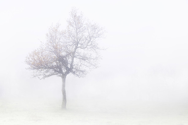 Disfrutando de la niebla