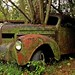 old car city, in the end.....nature wins