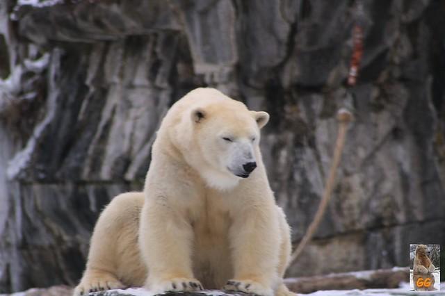 Besuch Tierpark Friedrichsfelde 06.02..21105