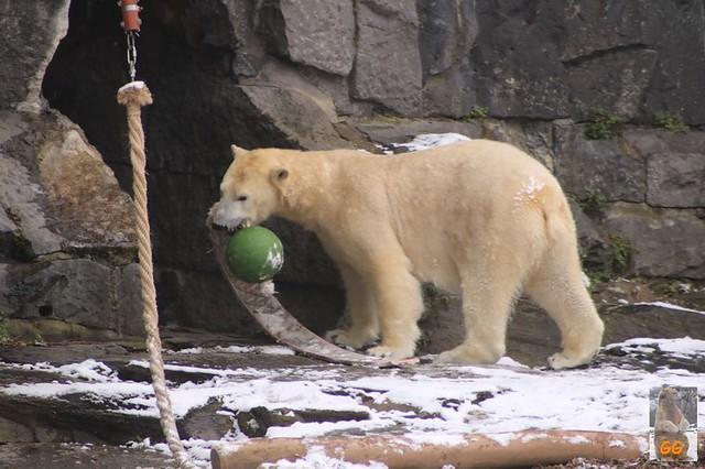 Besuch Tierpark Friedrichsfelde 06.02..21095