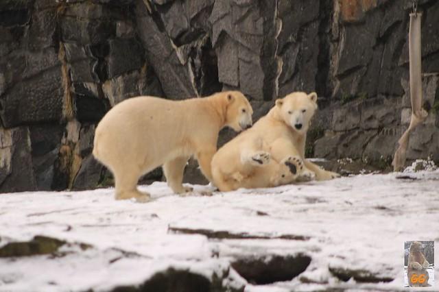 Besuch Tierpark Friedrichsfelde 06.02..21016