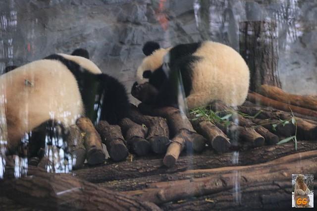 Besuch Tierpark Friedrichsfelde 06.02..21006