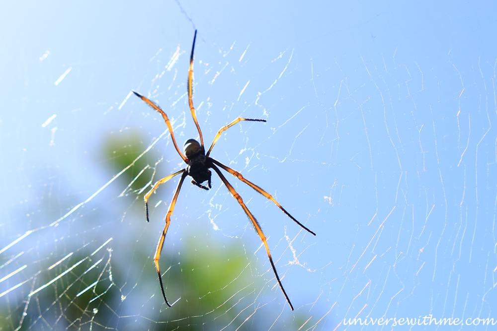 Spider Animal_019