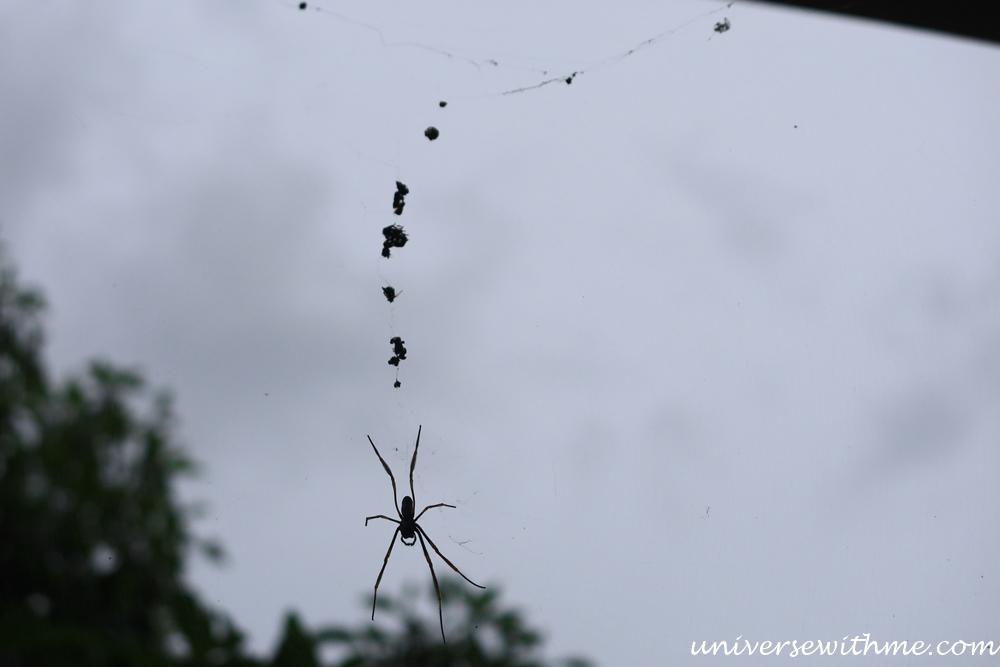 Spider Animal_016