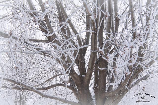 Snowy 2021 (5)