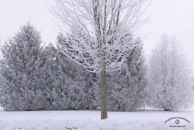 Snowy 2021 (3)