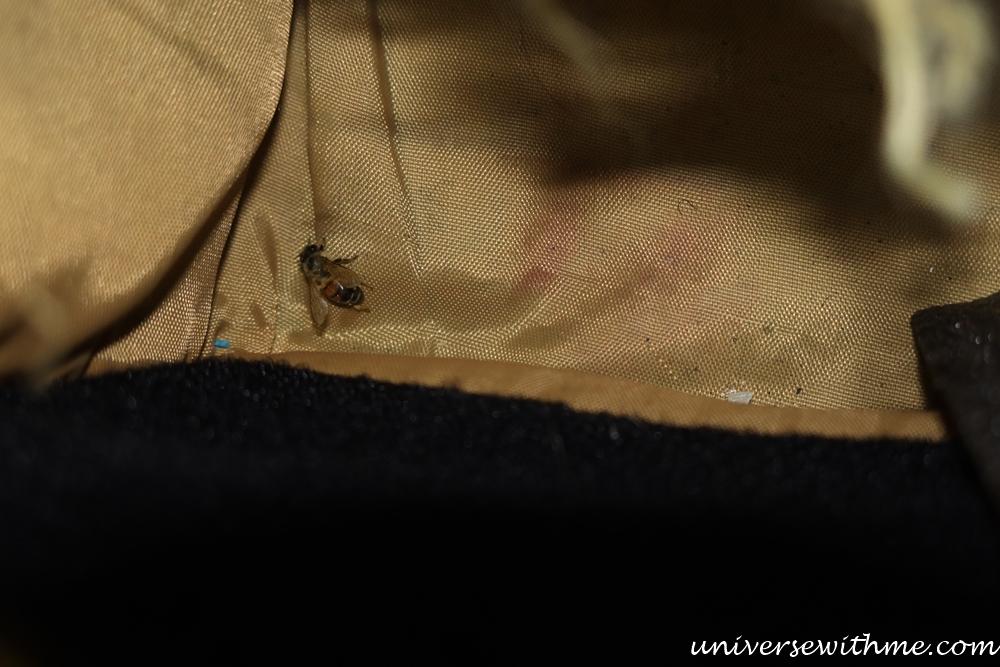 Spider Animal_007