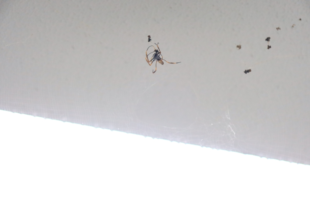 Spider Animal_031