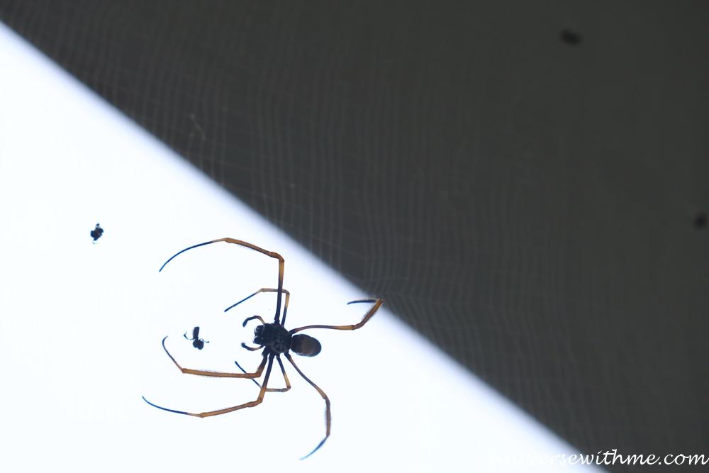 Spider Animal_022