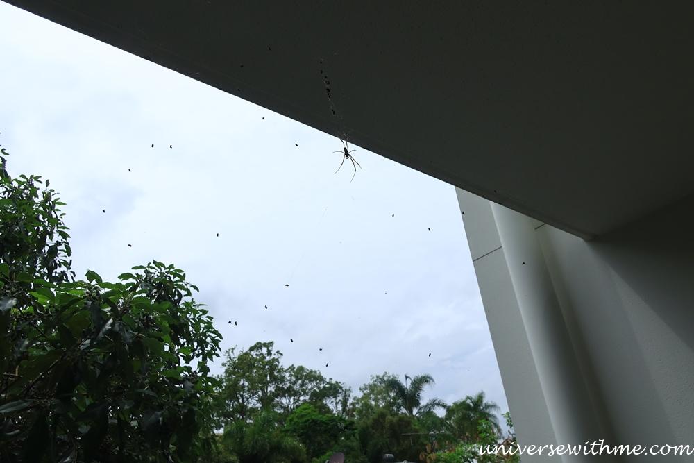Spider Animal_020