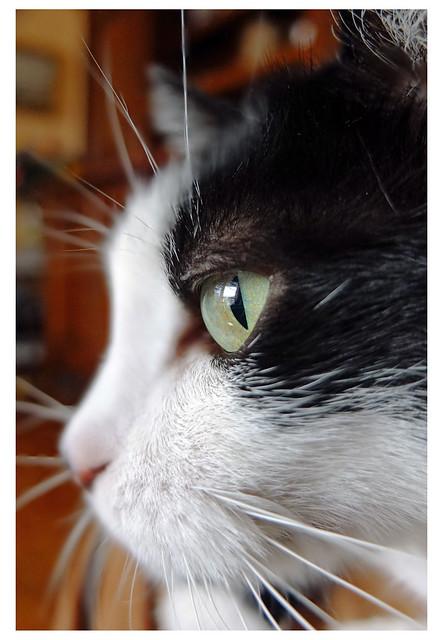 L'œil du chasseur