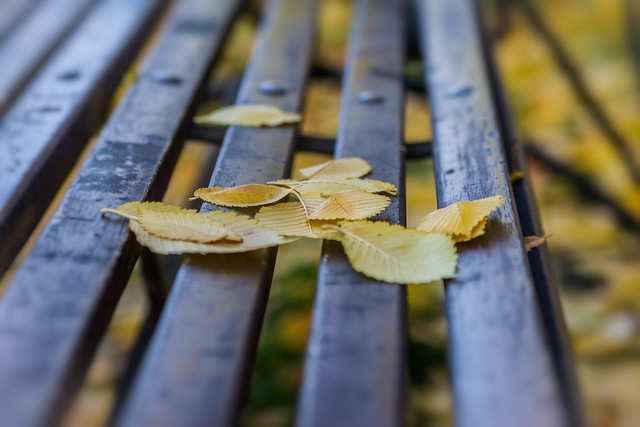 foliage on the bench