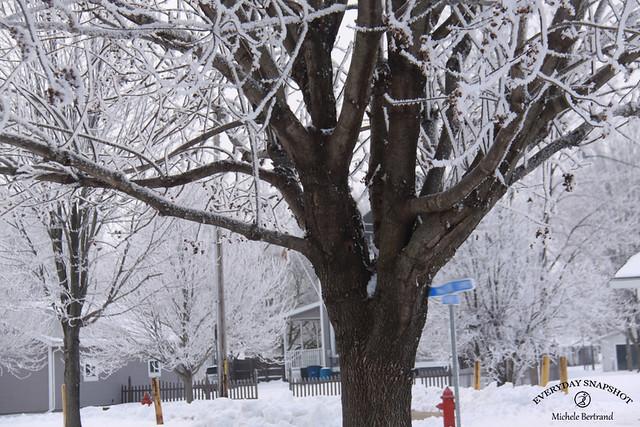 Snowy 2021 (4)